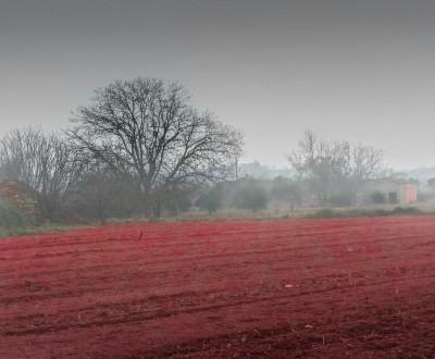 Paisatge d'hivern | Fotografia: Isabel Muntan.